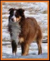 Schaffert's Ghost Eye Wil